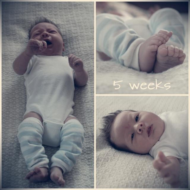 levi 5 weeks